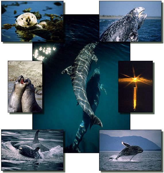 Ocean Friends Images